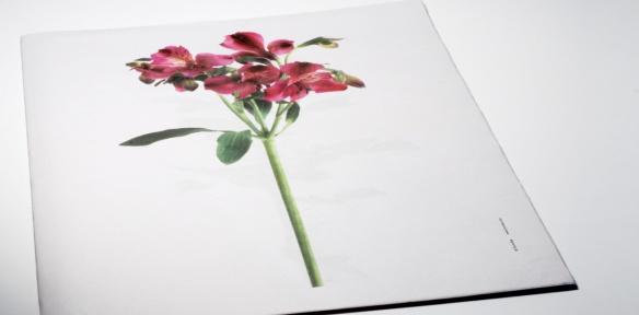 148_itunube_fresh_flowers07
