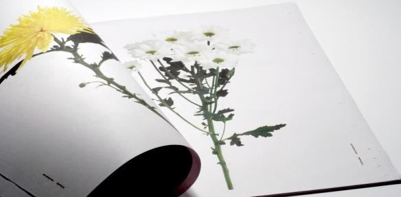 148_itunube_fresh_flowers15