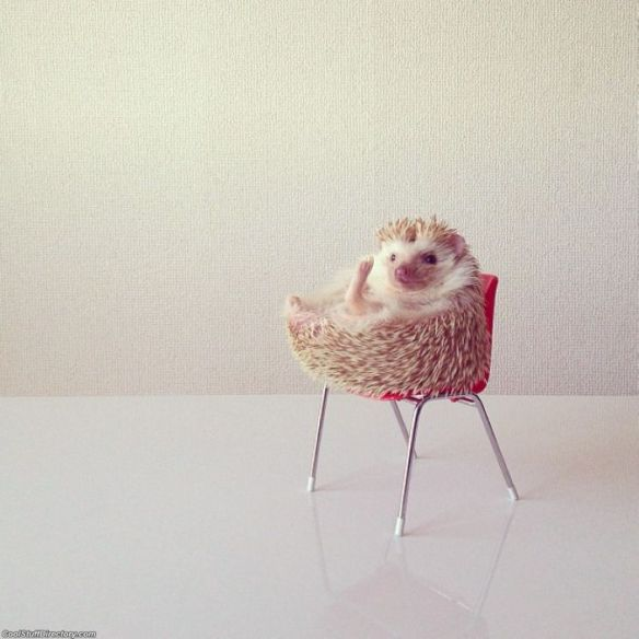 Darcy The Flying Hedgehog