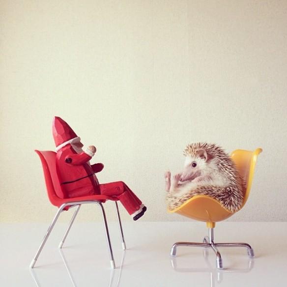 darcytheflyinghedgehog-00