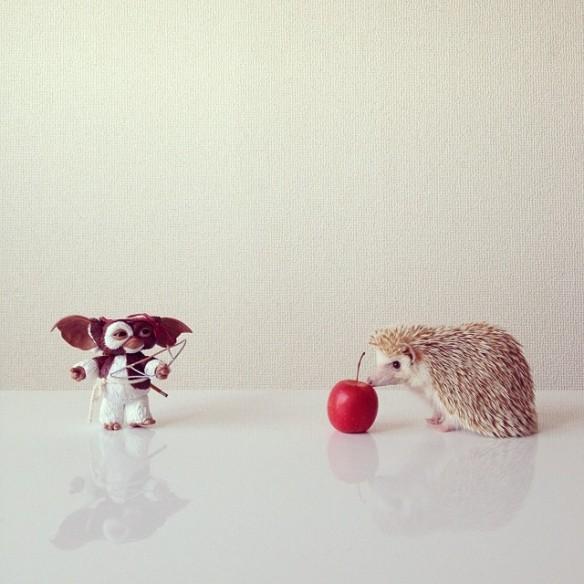darcytheflyinghedgehog-01