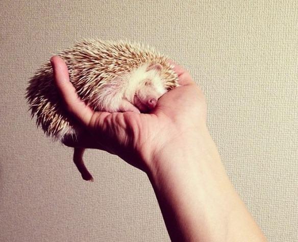 darcytheflyinghedgehog-2