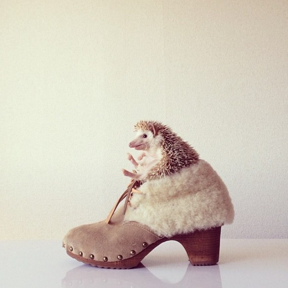 darcytheflyinghedgehog12
